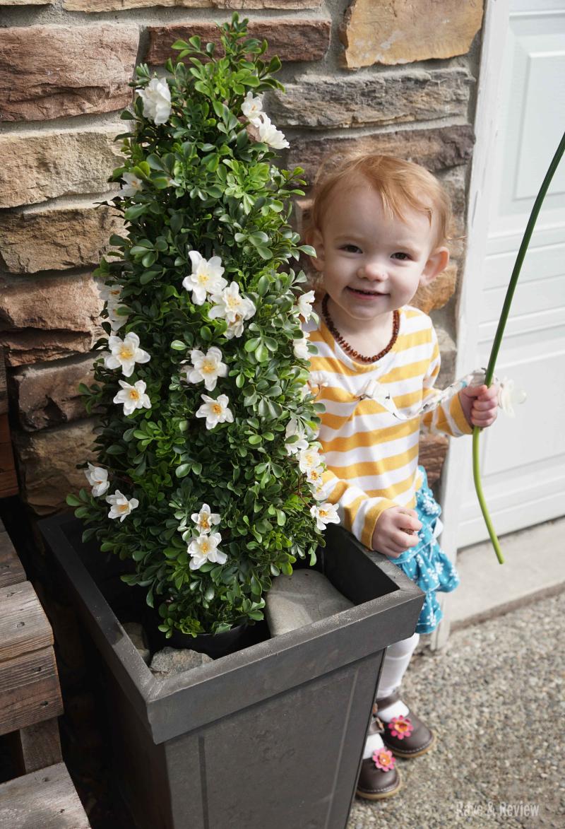 Hedge by kiddo